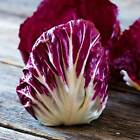 RADICCHIO GARDEN SEEDS - PALLA ROSA- HEIRLOOM VEGETABLE GARDENING - NON-GMO