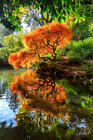 """Aaron Reed """"Dreams""""  Limited Edition Fine Art Acrylic + Free Peter Lik Book"""