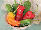 Cubanelle Sweet Pepper Seeds, NON-GMO, Variety Sizes, FREE SHIPPING