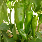 Anaheim Chile Hot Pepper Seeds, NON-GMO, Variety Sizes, Chili, FREE SHIPPING