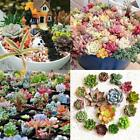 Desktop Mini Combination Mixed Succulent Green Plant Flower Potted Seeds SYL6