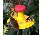 BUTTERFLY HOUSES & FEEDERS .