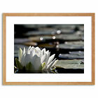 Photo Nature Flower Lotus Water Lily Beautiful Framed Print 9x7 Inch