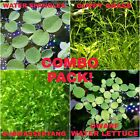 Subwassertang,Guppy Grass, Water Lettuce, Water Spangles, Amazon Frogbit  BONUS