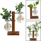Hydroponic Plant Glass Vases Flower Pot Wooden Frame Stand Home Decor Planter