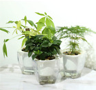 Self Watering Planter , FENGZHITAO African Violet Pots, Clear Plastic Automatic-