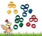 10 X 18mm Poultry Spiral Leg Rings 5 Colours Chicken Duck Hen Hatching eggs