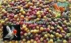 Top Quality+Value Mixed Colour Pellet, Food for Koi, GoldFish,Pond fish Free P+P
