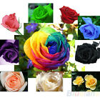 60 pcs Colourful Rose Seeds Petal Plants Home Garden Flower High Quality Nw BF3U