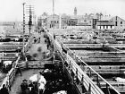 1904 STOCKYARDS CATTLE BEEF CHICAGO ILLINOIS PHOTOGRAPH Largest Sizes