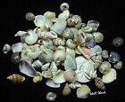 CRAFT SHELLS -100's Tiny Indian Ocean Mix Seashells -Sailors Valentine-FREE ship