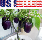 30+ ORGANICALLY GROWN Purple Beauty Pepper Seeds Sweet RARE Heirloom Crisp USA