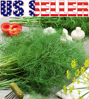 100+ ORGANICALLY GROWN Dukat Dill Seeds Heirloom Sweet Aromatic NON-GMO From USA