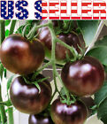 30+ ORGANICALLY GROWN Black Cherry Tomato Russian Heirloom NON-GMO RARE From USA cheap