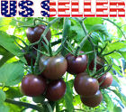 30+ ORGANICALLY GROWN Black Cherry Tomato Russian Heirloom NON GMO RARE From USA