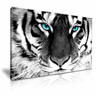 NEW ANIMAL Tiger 11 Canvas Framed Printed Wall Art ~ More Size