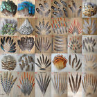 High Quality All kinds Different Beautiful Natural Pheasant Feather DIY Decor