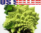 50+ ORGANICALLY GROWN Romanesco Natalino Broccoli Seeds Heirloom NON-GMO Italian
