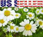 500+ ORGANICALLY GROWN German Chamomile Seeds Flower Herb Heirloom NON-GMO USA