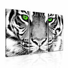ANIMAL Tiger 26 Canvas 3A Framed Printed Wall Size ~ 3 Panels