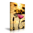 Lotus Sunset Wall Art Canvas Print Framed Box ~ Many Size