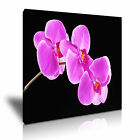 FLOWER Orchid Canvas Framed Printed Wall Art 12 ~ More size
