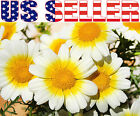 200+ Garland Daisy Seeds Flower White Yellow Beautiful Decorative Chrysanthemum