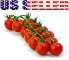 50+ ORGANIC Large Red Cherry Tomato Heirloom NON-GMO Sweet Productive Delicious!