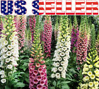 500+ Foxglove Excelsior Mix Seeds Flower Pink Purple Cream White Colorful Vivid