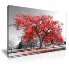 LARGE TREE Red Leaves Nature Canvas Wall Art Picture Print ~ More Size