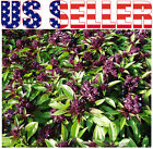 100+ ORGANICALLY GROWN Siam Queen Basil Seeds Heirloom NON-GMO Sweet and Spicy