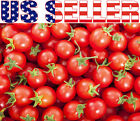 30+ ORGANICALLY GROWN Sweetie Cherry Tomato Seeds Heirloom NON GMO Sugar Sweeti