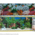 "16""/40cm Aquarium Fish Tank Double Sided Background Marine Coral & Plants #B"