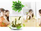 WILD GREEN TEA FOR NATURAL WEIGHT LOSS - BOOSTS METABOLISM, HELPS IN BURNING FAT