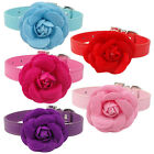 5pcs Cute PU Leather Puppy Dog Cat Collars With Big Flower Studded for Girl Dogs