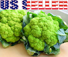 30+ ORGANICALLY GROWN Verde di Macerata Green Cauliflower Seeds Heirloom NON-GMO