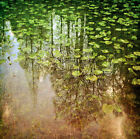 Pete Kelly LILY POND landscape print, PREMIUM QUALITY Giclee, various sizes new