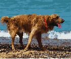 Dogs At The Ocean Needlepoint Kit or Canvas (Animal)