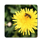 Bee on a Dandelion - Oversized Rubber Coasters Set of 4 or 6