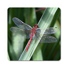Dragonflies / Dragonfly 3 - Oversized Rubber Coasters Set of 4 or 6