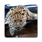 Leopard - Oversized Rubber Coasters Set of 4 or 6