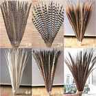 10PCS High Quality All Kinds Different Beautiful Natural Pheasant Feather