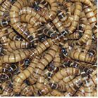 250 to 4,000 Large Live Superworms Free Shipping!