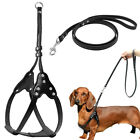 Step In Leather Pet Dog Harness and Leash set for Small Large Breeds Dachshund