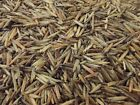 Minnesota Wild Rice Hand-Harvested 100% Natural $14.99 USD on eBay