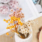 30pcs Dried Flowers Mini Daisy Small Star Diy Floral Bouquets Home Decor Uk