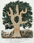 Decor POSTER.American History TREE.Home Art.Room Interior wall design.1036