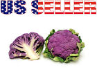 50+ ORGANICALLY GROWN Purple of Sicily Cauliflower Seeds Heirloom NON-GMO Rare