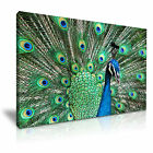 NEW ANIMAL Peacock 3 Canvas Framed Printed Wall Art ~ More Size