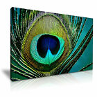 NEW ANIMAL Peacock 4 Canvas Framed Printed Wall Art ~ More Size